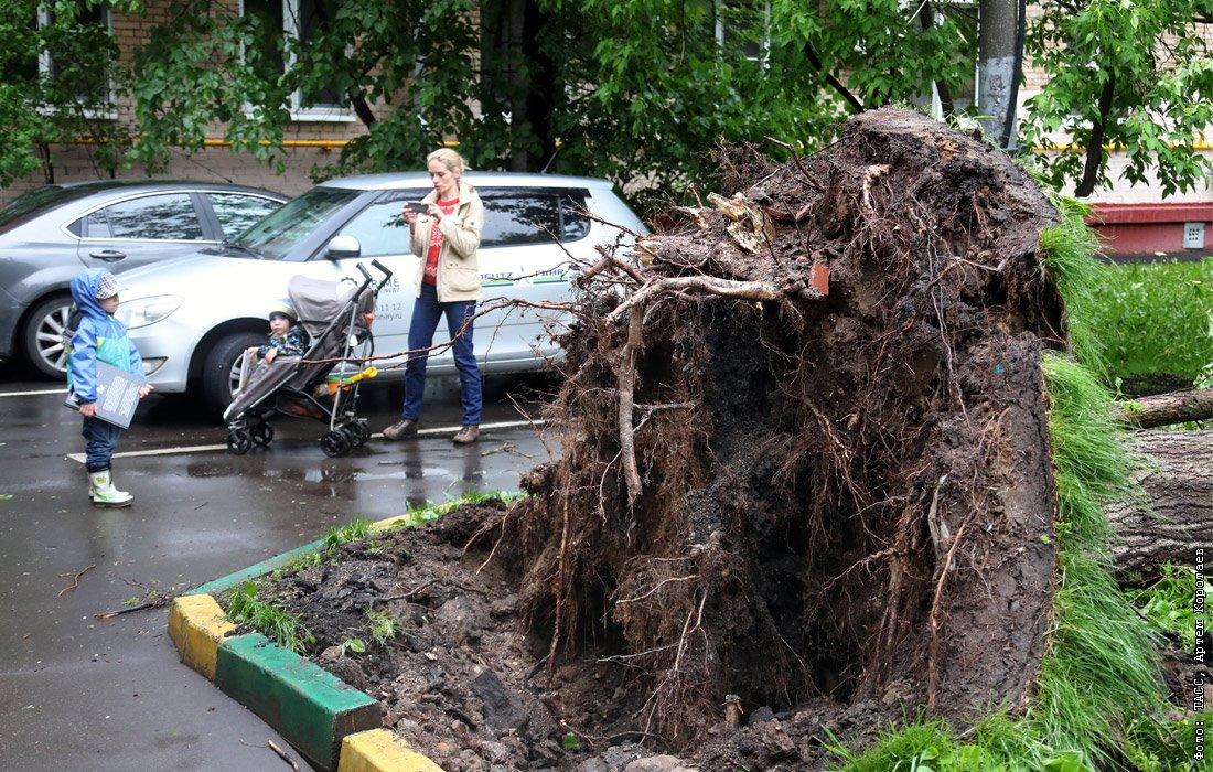 последствия урагана в москве фото классный уголок можно