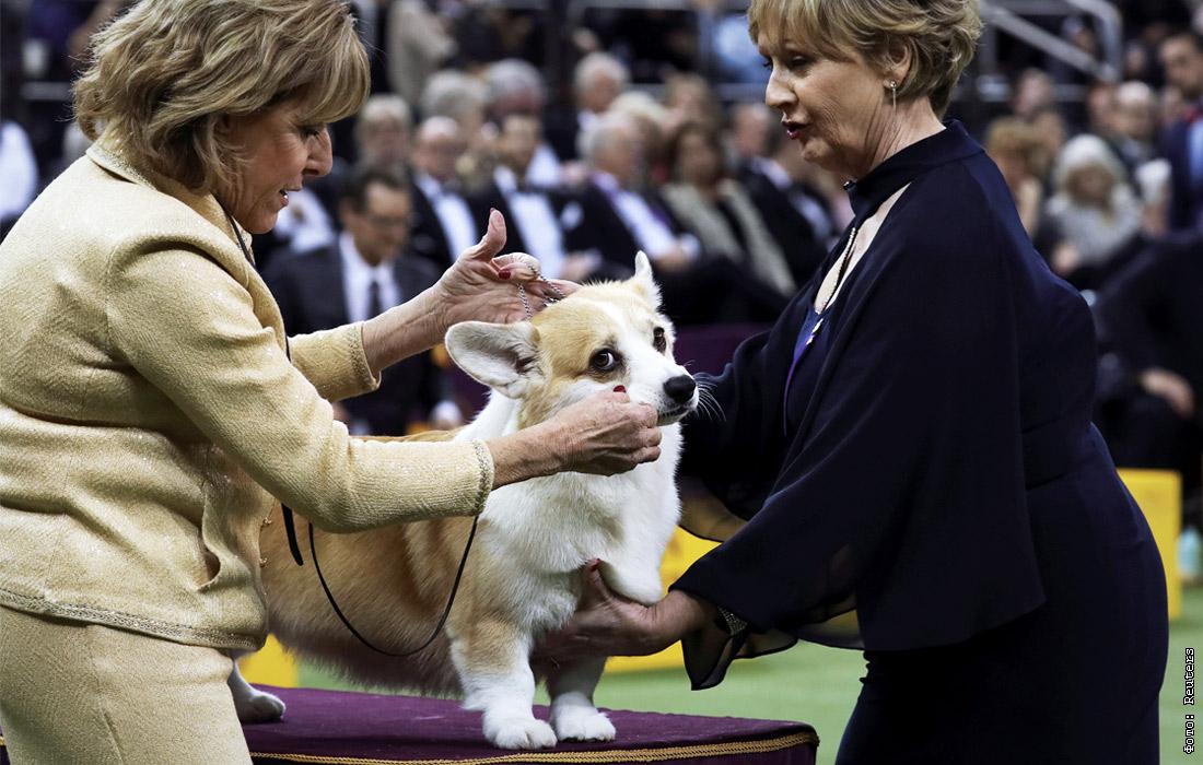 Открытки выставка собак