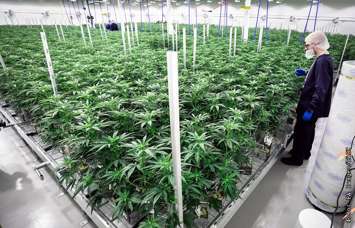 Какое удовольствие от марихуаны листья марихуаны 3d