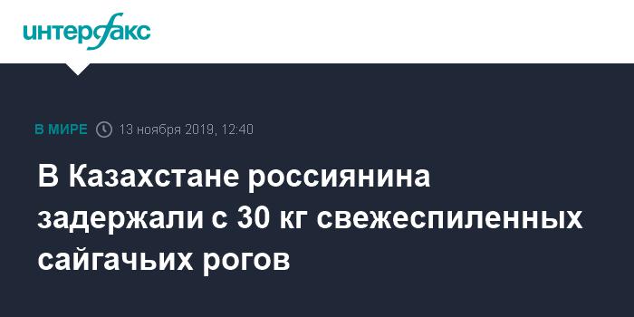 В Казахстане россиянина задержали с 30 кг свежеспиленных сайгачьих рогов