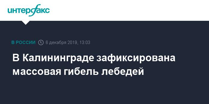 В Калининграде прокуратура начала расследование причин гибели лебедей