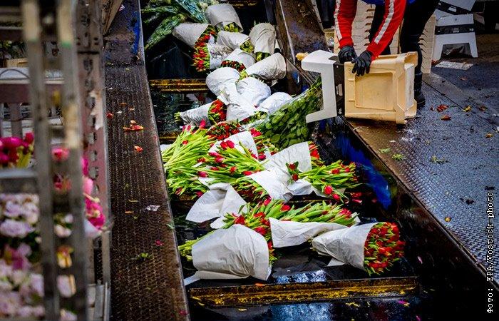 Из-за коронавируса цветоводы выкидывают до 1,2 млн роз в сутки