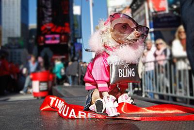 Собачий маскарад в Нью-Йорке