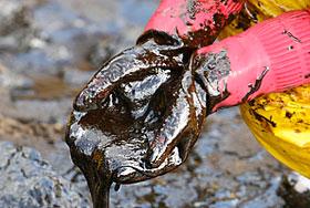 Цены на нефть и золото бьют рекорды