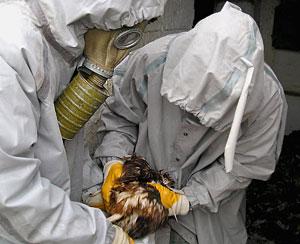 Приморские ветеринары сдерживают очаг птичьего гриппа