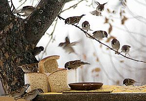 """Страшное слово: """"хлебные карточки"""""""