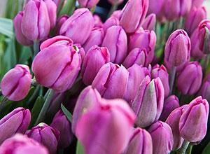 Жизнь, превращенная в цветы