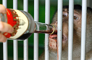 По теневому алкоголю бьют рублем