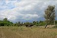 Пресс-служба МЧС Украины объявила о прекращении поездок граждан в Чернобыльскую зону.