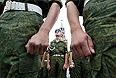 Десантники во время празднования Дня Воздушно-десантных войск РФ на Красной площади в День Ильи Пророка - покровителя российских ВДВ.