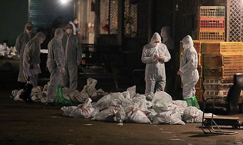 Более 20,5 тыс. голов домашней птицы было уничтожено на одном из рынков китайского мегаполиса Шанхая после того, как специалисты обнаружили вирус гриппа H7N9 в тканях продававшихся там голубей, сообщили местные СМИ в пятницу.