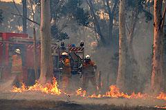 В Австралии горят леса