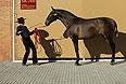 Француженка Натали Овезарек позирует с двухлетней кобылой по кличке Катета перед открытием выставки в Sicab International Pre Horse Fair в андалузской Севилье. Шоу открывается 8 декабря и будет целиком посвящено испанской чистокровной породе.