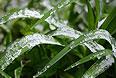 Прошедшая ночь в Москве стала самой холодной с начала мая, температура в регионе опустилась на 5-6 градусов ниже климатической нормы.
