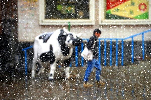 Майский снегопад на улицах Москвы.