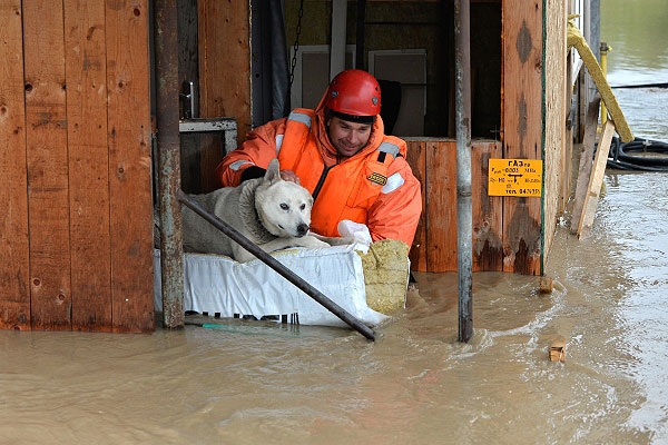 Сотрудник МЧС спасает собаку из сарая в селе Майма во время наводнения из-за вышедшей из берегов реки Катунь. Из-за проливных дождей произошел подъем уровня воды в реках, что привело к подтоплениям на территории Республик Хакасия и Алтайского края.