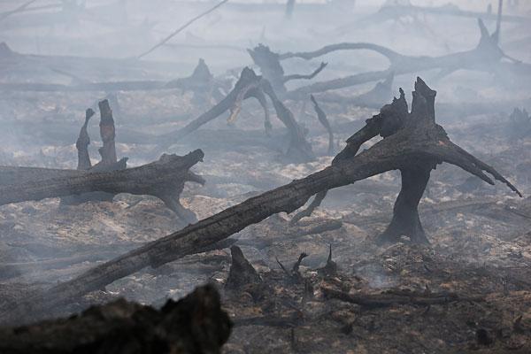 Выгоревший лес в результате торфяного пожара у деревни Старое Мелково.
