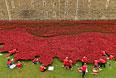 """Еще до окончания """"высадки"""" всех цветов инсталляцию посетили около пяти миллионов человек. В интернете же начался сбор подписей под петицией с призывами оставить маки у Тауэра хотя бы на один год, чтобы как можно больше людей смогли их увидеть."""