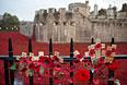 Чаще всего маки как символ памяти погибших на войне используются в Соединенном Королевстве, Новой Зеландии, Австралии, США и Канаде.