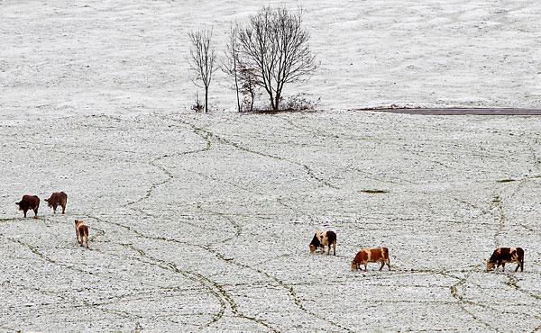 Заснеженное поле в деревне Бад-Тёльц на юге Германии.