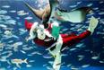 Дайвер в костюме Санта-Клауса кормит обитетелей аквариума Sunshine, Токио