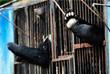 Медведи в затопленном зоопарке Уссурийска