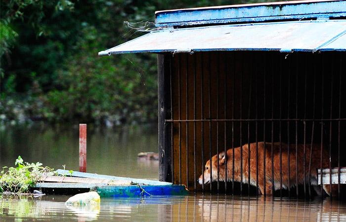 """Волк в затопленном вольере зоопарка """"Зеленый остров"""" в Уссурийске"""