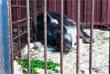 Состояние животных трижды в сутки проверяют представители ветеринарной службы и Россельхознадзора