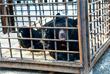 """Животных из затопленного зоопарка Уссурийска """"Зеленый остров"""" разместили во временных убежищах"""