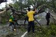 Сильным ветром были повалены деревья, повреждены крыши зданий