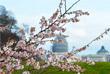 Цветение японской вишни в Вашингтоне