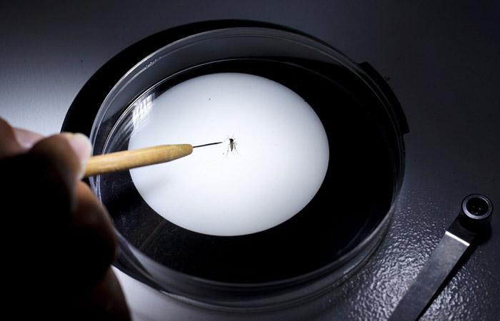 Вирус Зика передается людям через укусы комаров Aedes Aegypt, которые живут и размножаются в условиях жаркого тропического климата. Вирус вызывает повышенную утомляемость, головную боль, конъюнктивит, кожную сыпь, повышенную температуру и боль в мышцах и суставах. Эти симптомы сохраняются у заболевших в течение 2-7 дней. Медицинские власти американского штата Техас установили, что вирус Зика также может передаваться от человека человеку половым путем.