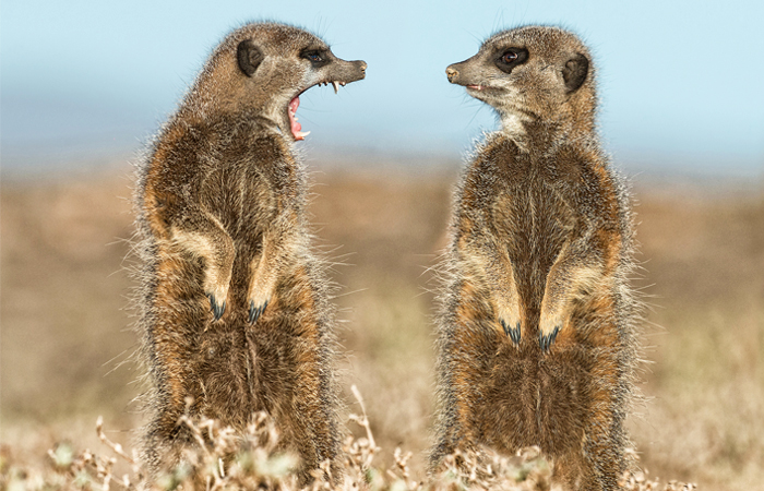 Comedy Wildlife Photo Awards 2016 - фото 7 из 12