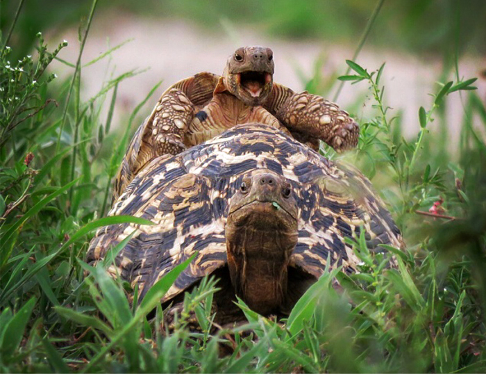 Comedy Wildlife Photo Awards 2016 - фото 11 из 12