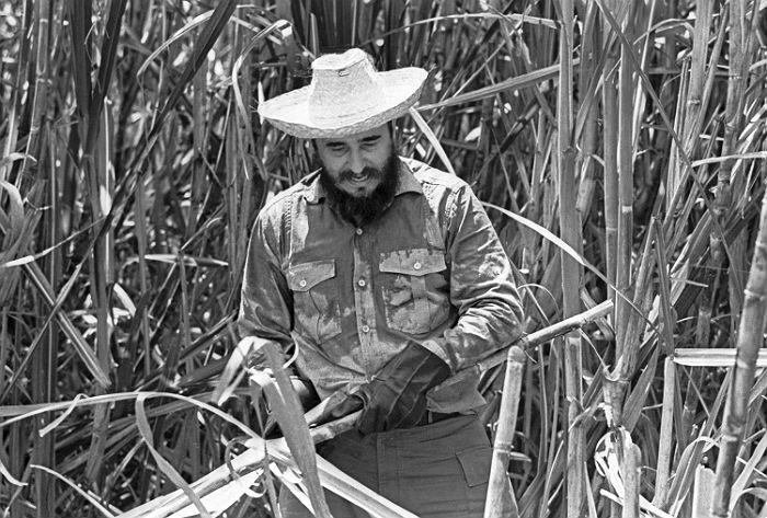 Первый секретарь ЦК Компартии Кубы Фидель Кастро на уборке сахарного тростника в провинции Орьенте. Куба, 1969 год