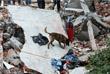 На руинах рухнувших зданий работают спасатели и полицейские со служебными собаками
