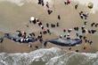 Четыре кита погибли, несмотря на усилия спасателей вернуть их в открытое море