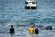 Млекопитающих смогли вывести на открытую воду с помощью веревок и патрульных катеров