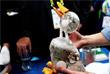 Робот-утка Aflac, предназначенный для успокоения детей, болеющих раком. Утка может распознавать состояние ребенка и полностью повторять эмоции.