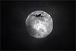Сегодня ночью Луна приблизилась к нашей планете до расстояния 358 тысяч километров, но это еще не все
