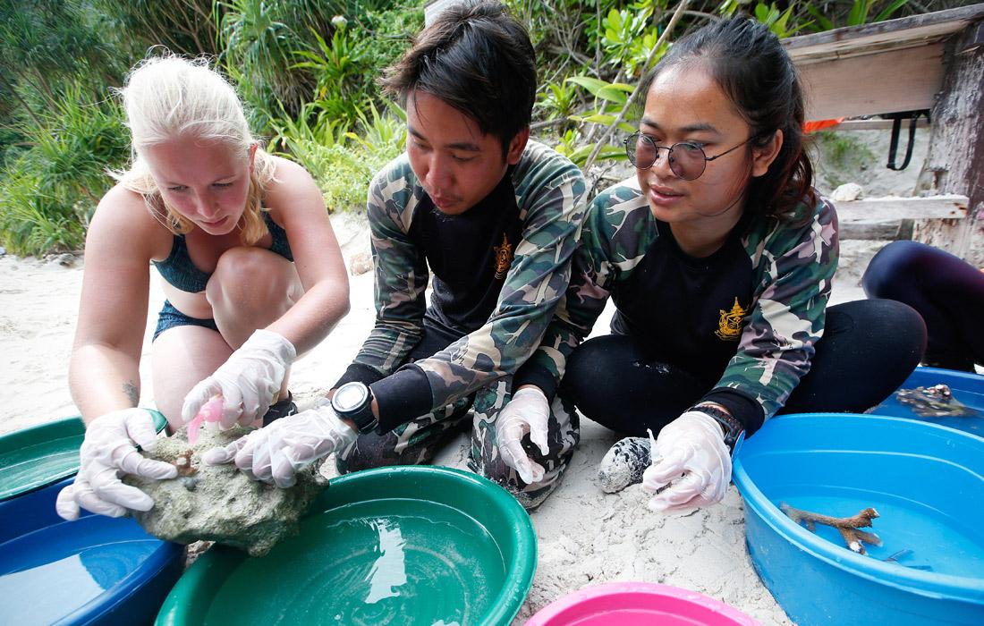 Таиланд закрыл для туристов бухту из знаменитого кинофильма «Пляж»