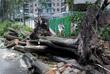 Сломанные тайфуном деревья в в Шэньчжэне, Китай