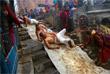 В Непале проходит индуистский фестиваль Мадхав Нараян. Во время празднования, которое продолжается целый месяц, верующие совершают паломничества и различные ритуалы. Завершающим этапом чествования бога Мадхава Нараяна и богини Свастхани является массовое омовение в одной из священных рек.