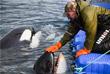 """Все сотрудники """"китовой тюрьмы"""" называют себя """"тренерами"""" и открыто говорят, что готовят этих животных """"к работе в океанариуме"""""""