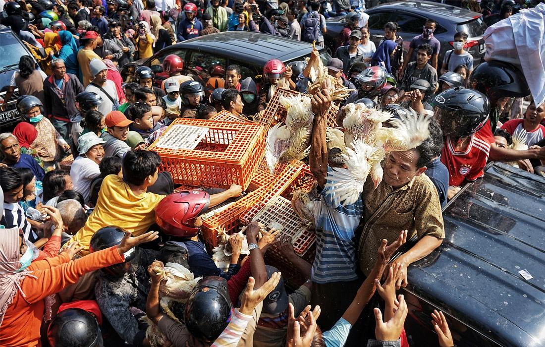 Работники Индонезийской ассоциации птицеводов раздают кур возле здания мэрии в Джокьякарте во время акции протеста против низких цен на курятину