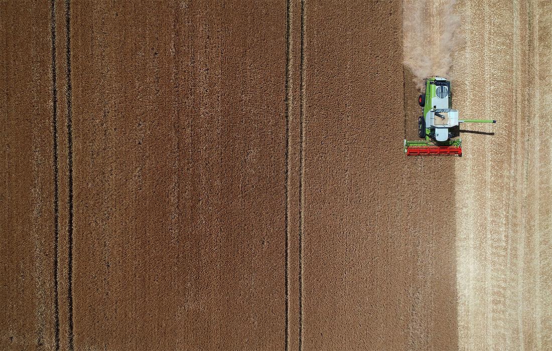 В Германии начался сбор зерна ячменя