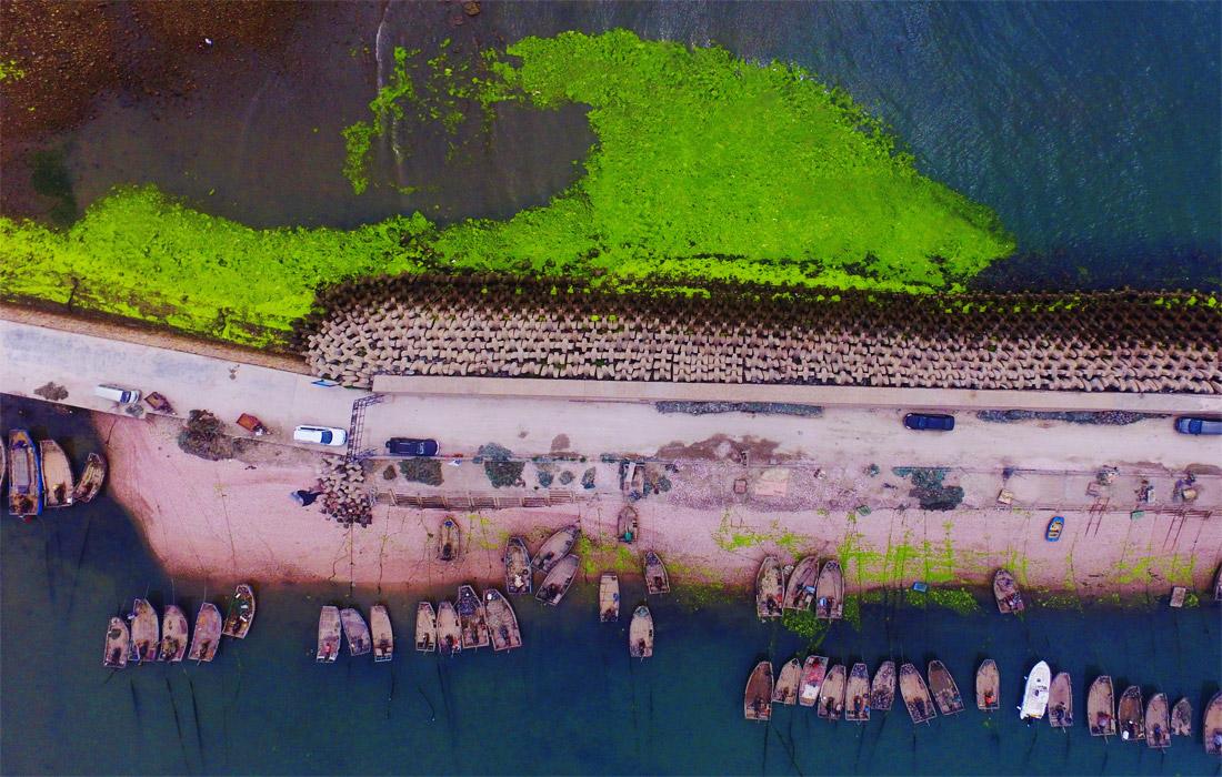 Водоросли ярко-зеленого цвета покрыли прибрежную акваторию города Циндао, провинция Шаньдун