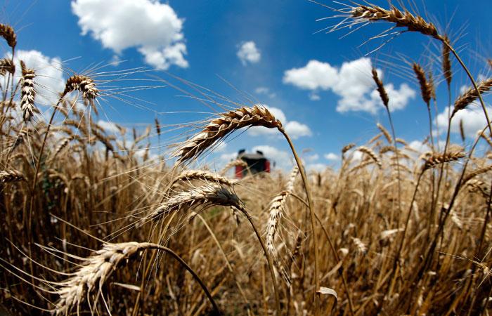 Россия получила право на экспорт пшеницы в Саудовскую Аравию
