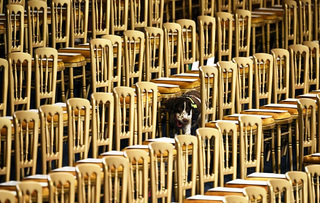 В преддверии открытия парламента были усилены меры безопасности. На фото: служебная собака обыскивает Королевскую галерею.