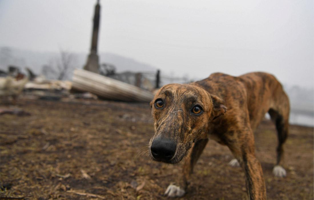 Собака ждет хозяев у сгоревшего дома в городе Киа